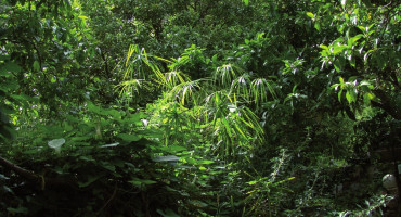 Gli ambienti naturali